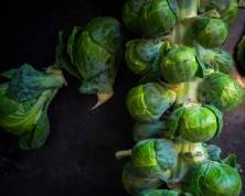 sprouts_3